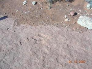 Warner Valley Dinosaur Tracks, UT